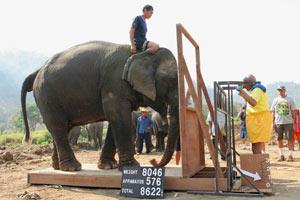 Sri Chinmoys hebt Elefant mit 3910 kg